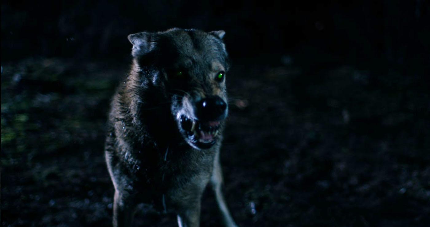 images/films/short/braker/Braker-Diversen/braker-wolf.jpg